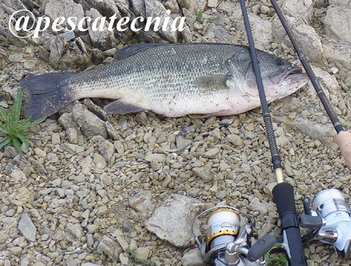 Black Bass Pescatecnia 10