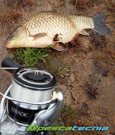 Carpín Pescatecnia1