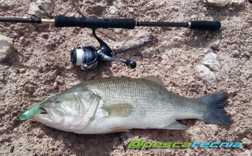 Black Bass 3,1 kg 1 de 2