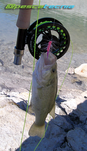 Black Bass pescado a mosca